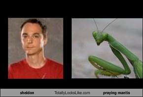 sheldon Totally Looks Like praying mantis