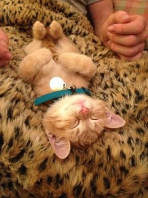 A Fuzzy Sleeper
