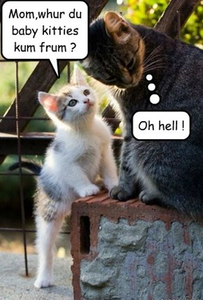 Mom,whur du baby kitties kum frum ?