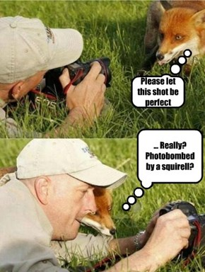 Foxes, lacking opposible thumbs, are forced to find assistance to take selfies.