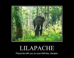 LILAPACHE