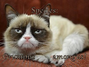 Species:  Grumpus        amongus!