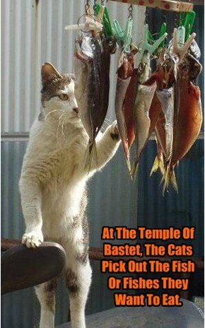 At The Temple Of Bastet, The Cats Pick Out The Fish Or Fishes They Want To Eat.