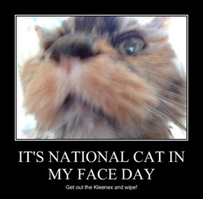 IT'S NATIONAL CAT IN MY FACE DAY