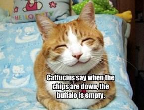 Catfucius 4