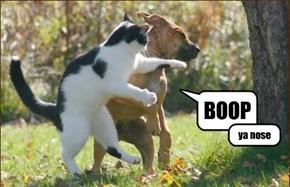 You Get a Special Boop...