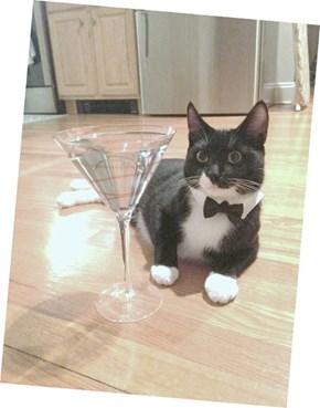 James Kitty Bond Drinking Its Martini Shaken Not Stirred