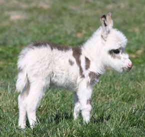 Adorable Donkey Fuzz