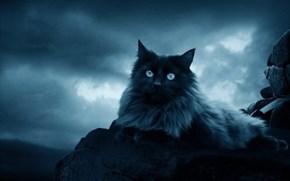 _The_Black_Cat__by_moroka323