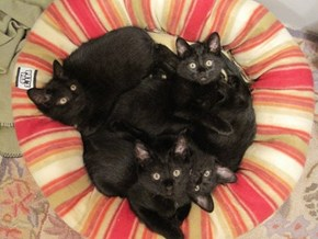 How Many Black Cats are in this Picture?