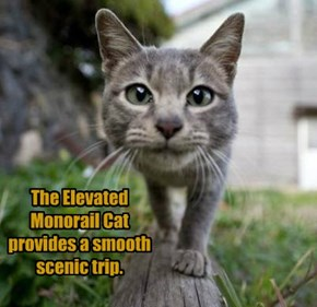 The Elevated Monorail Cat provides a smooth scenic trip.