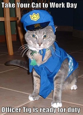 Take Your Cat to Work Day  Officer Tig is ready for duty