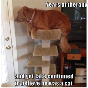 Years of therapy  and yet Jake continued                                                            to believe he was a cat.