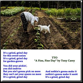 """Salad Days"" (TTO ""A Fine, Fine Day"" by Tony Carey)"