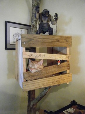 Ultimate Boy Kitty's Tree House