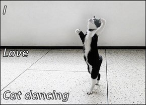 I  Love  Cat dancing
