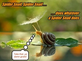 Slow me whatcha got, Snail!