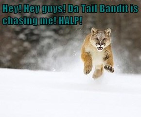 Hey! Hey guys! Da Tail Bandit is chasing me! HALP!