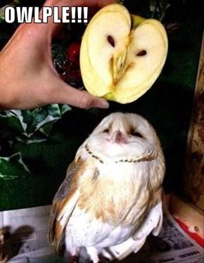 OWLPLE!!!