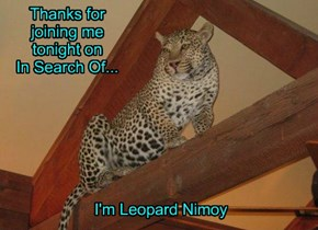 Tonight We Learn How Leopards Get Their Spocks