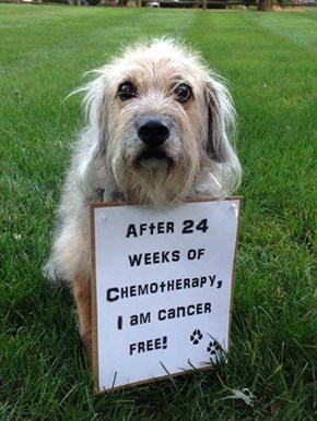 After 24 weeks of Chemotherapy, I am cancer free