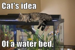 Cat's idea  Of a water bed.