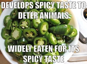 Bad Luck Jalapeños