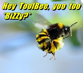 Hey  ToolBee,  yoo  too *BiZZy?*