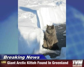 Breaking News - Giant Arctic Kitteh Found In Greenland