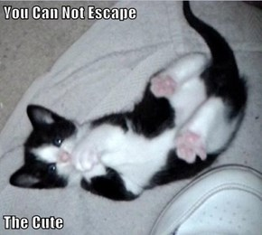 You Can Not Escape  The Cute