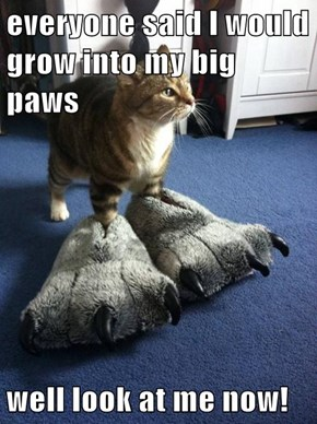 everyone said I would grow into my big paws  well look at me now!
