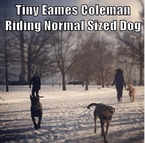 Tiny Eames Coleman Riding Normal Sized Dog