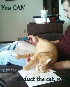 You CAN  deduct the cat, now.