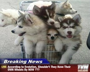 Breaking News - According to Evolution, Shouldn't They Have Their OWN Wheels By NOW ???