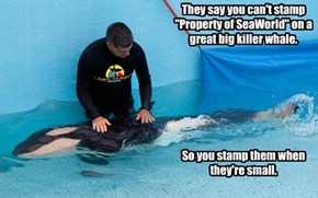 "They say you can't stamp ""Property of SeaWorld"" on a great big killer whale."