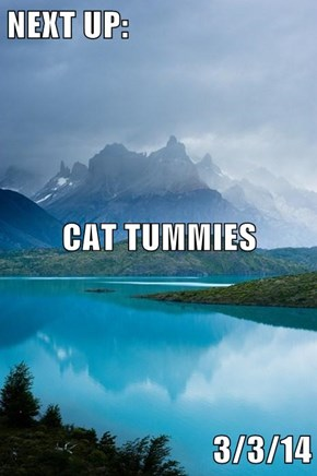 NEXT UP: CAT TUMMIES 3/3/14