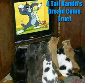 A Tail Bandit's Dream Come True!