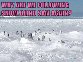 WHY ARE WE FOLLOWING SNOW BLIND SAM AGAIN?