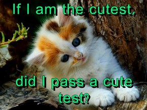 If I am the cutest,  did I pass a cute test?