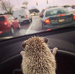 Outta my Way or I'll Spike Your Tires!