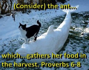 (Consider) the ant...  which...gathers her food in the harvest. Proverbs 6-8