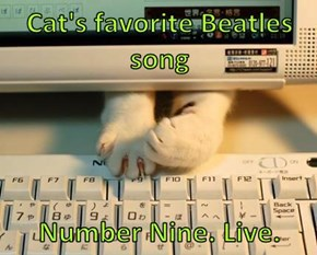 Cat's favorite Beatles song  Number Nine. Live.