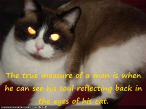 The true measure of a man is when he can see his soul reflecting back in the eyes of his cat.