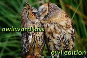 awkward kiss owl edition