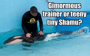 Gimormous trainer or teeny tiny Shamu?