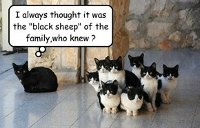 "I always thought it was the ""black sheep"" of the family,who knew ?"