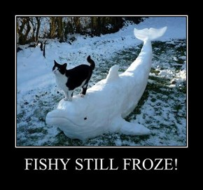 FISHY STILL FROZE!