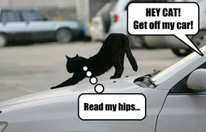 HEY CAT!   Get off my car!