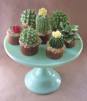 Prickly, Delicious Cupcakes