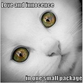 Love and innocence  in one small package